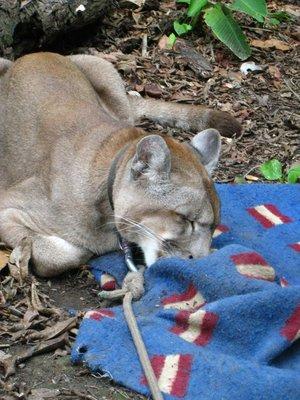 Leo on his blanket