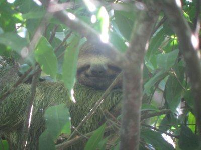 Say Cheese Sloth