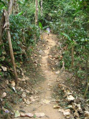 Path to Ahka Hill Waterfall