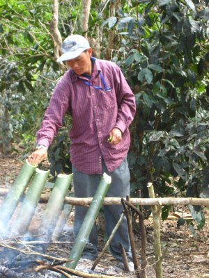 Our guide filling the bamboo with wild tea leaves