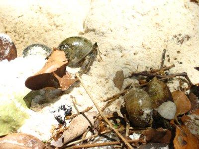 Crabs on Ko Rok