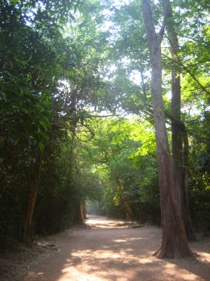 Walking up to Ta Prohm