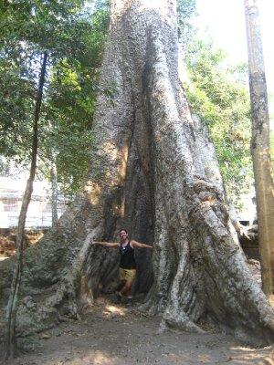 Sarah in a tree at Ta Prohm