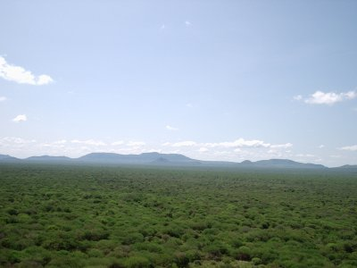 Tsavo Ecosystem, Communities, Animals, volunteers
