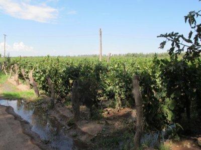Familia Di Thomosa winery