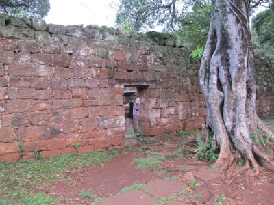 San Ignacious Mini, Jesuit Ruins: This gnarled tree is said to have a Stone Heart, as it has completely engulfed and grown around a stone pillar that was part of the mission complex