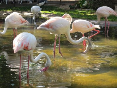 My favourite- the elegant flamingos.