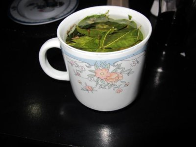 Coca tea - the most popular herbal tea in Peru made from the coca plant. It is a miracle tea for alleviating symptoms of altitude sickness.