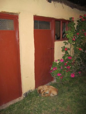 Juanito spent the night curled up outside our door waiting for Ben!