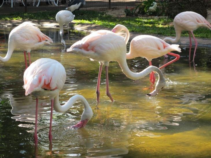 My favourite- the elegant flamingos.