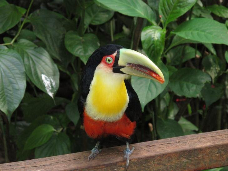 Who can? Tucan!