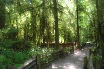 Canada_cathedralgrove.jpg
