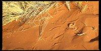 Namibia_Sossusvlei_slang.jpg