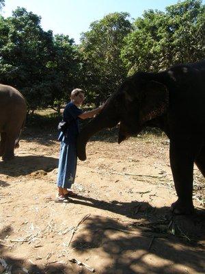 Nourir les elephants