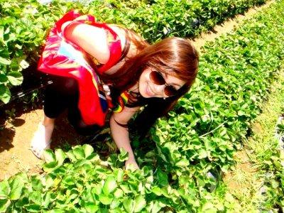 Baguio's Berries :)