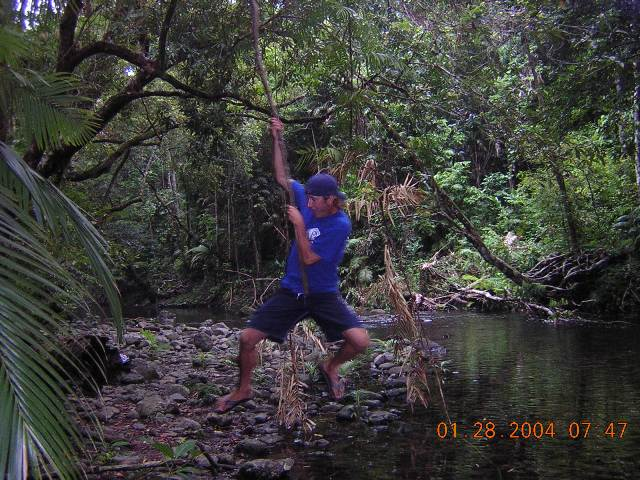 Cape Tribulation Jungle Man
