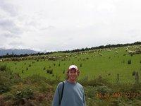 Obligatory NZ Sheep Photo