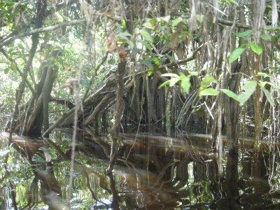 Cruising through the flooded rainforest