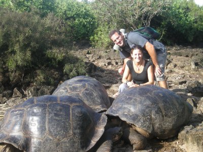 Darwin centre tortoises