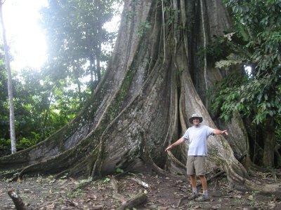 Huuuge tree 250 years old