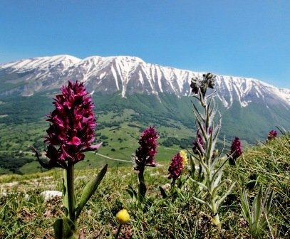 Mountains and Orchids