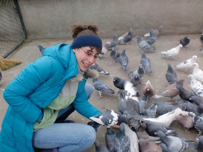 attacked by pigeons