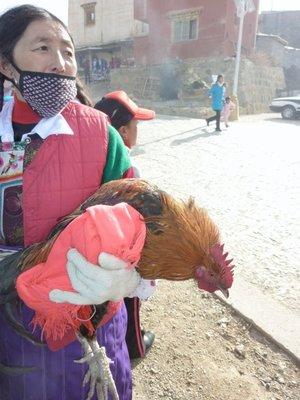 Friendly chicken for dinner