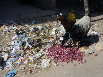 Typical meal for cows and street animals