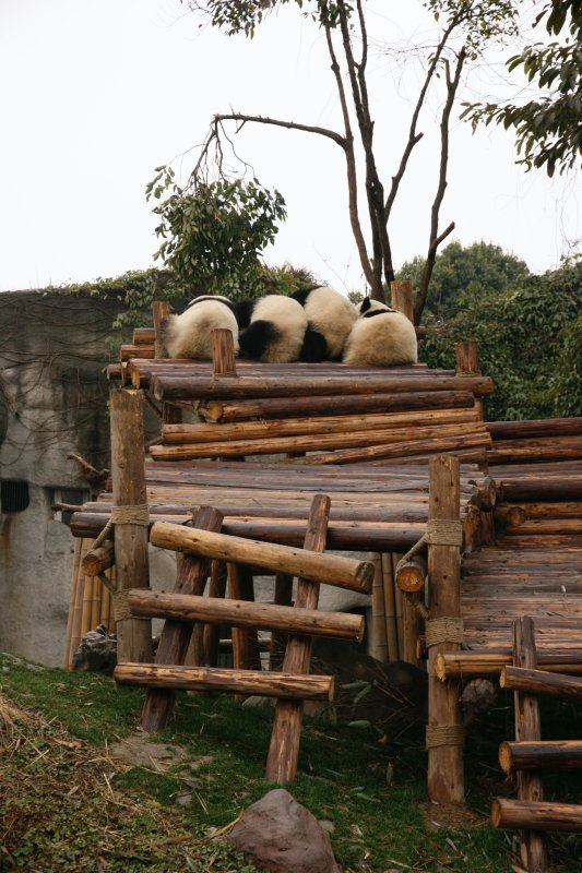 except for these panda booties all in a row