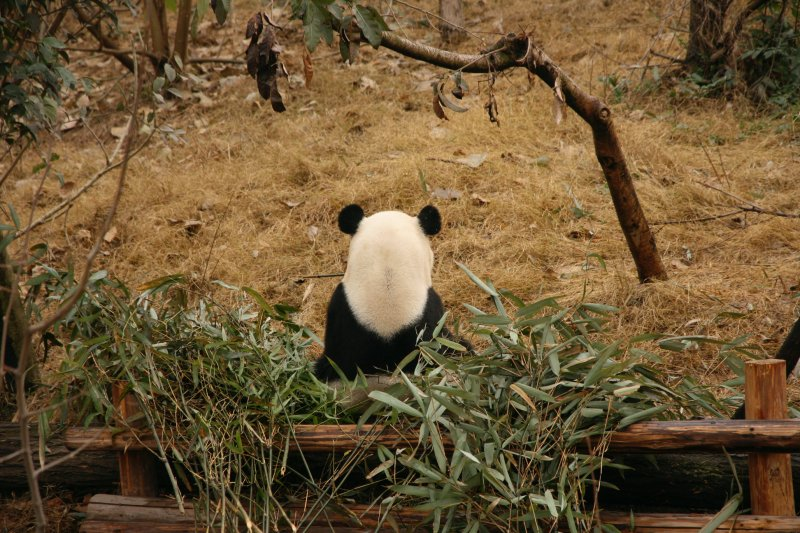 my only unblurry photo from panda visit!