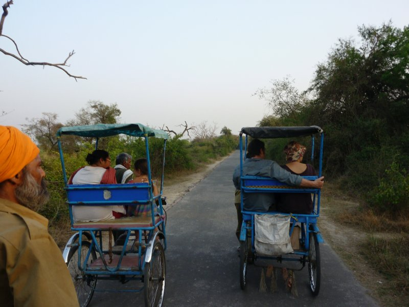 rickshaw bird watching