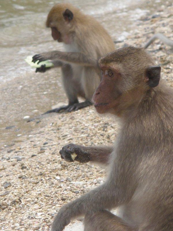En nog meer apen......