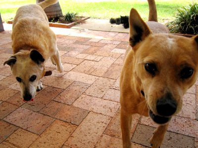 Chip and Bart the crazy dogs!