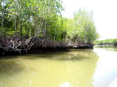 mangroves around Koh Lanta