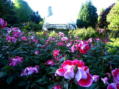 My favorite place in Christchurch, the botanical gardens