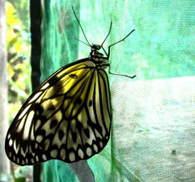 Butterfly conservation centre