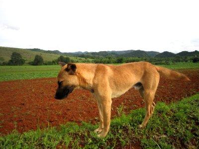 Bob the faithful dog