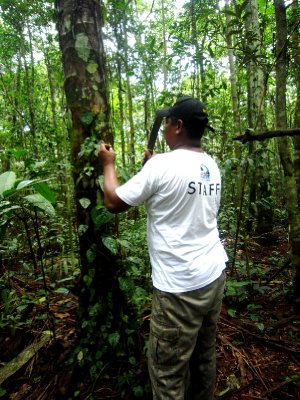 Amazon expedition, looking for medicinal plants
