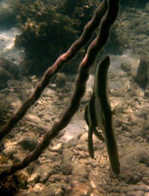 Snorkelling! Very weird fish