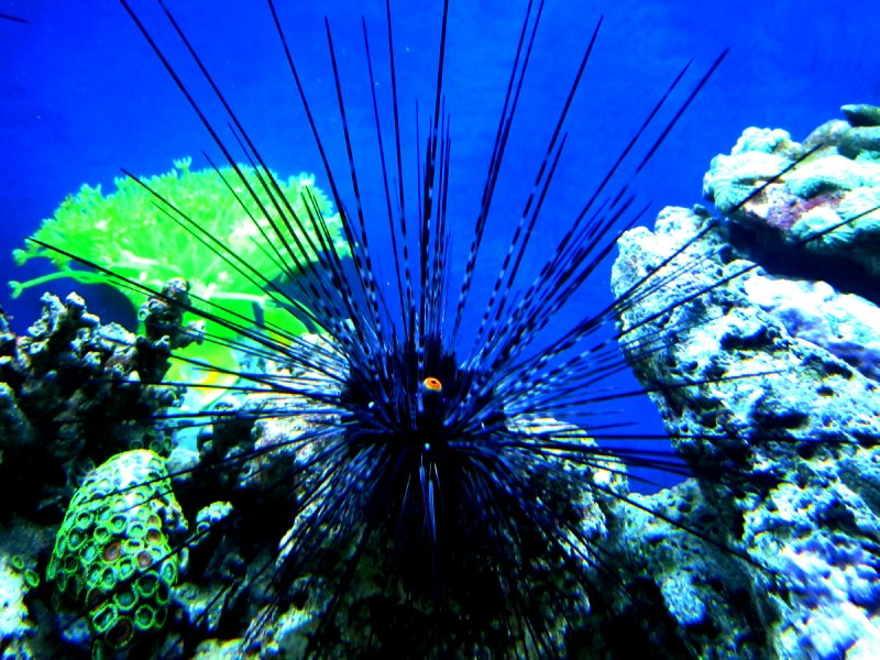 The evil sea urchin with the evil cyclops eye that speared Karen