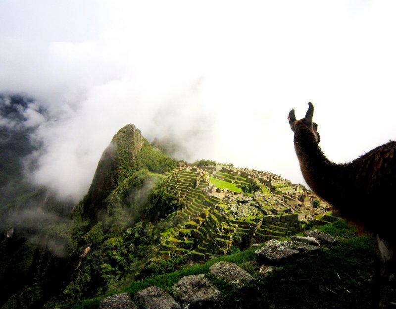 Watching Machu Picchu appear through the clouds with my llama friend