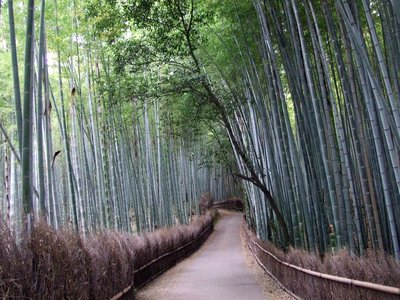walking through bamboooo