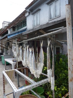 Hanging the fish out to dry