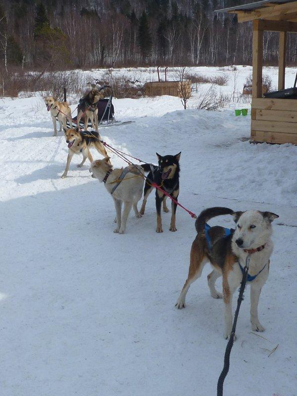 Huski Team