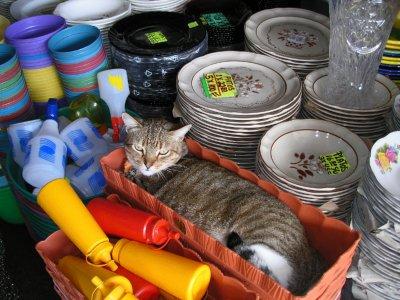 Cat at the Mercado!
