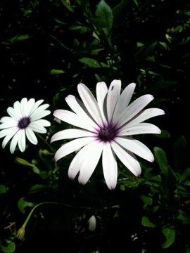 Dalyan flora