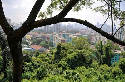 view-from-mount-faber.jpg