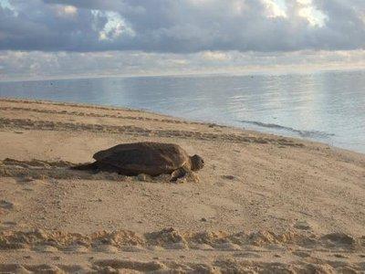 turtle-aft..ng-eggs.jpg