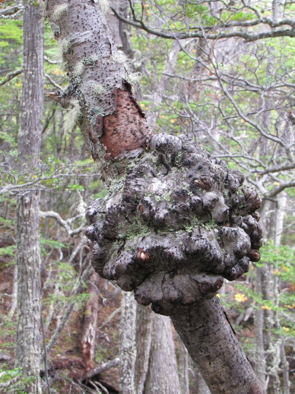 Weird Tree Growth