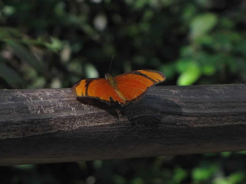 large_Iguazu_Falls_101.jpg